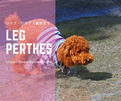 レッグ・ペルテス手術6(保険金$が帰ってきたよ~!)